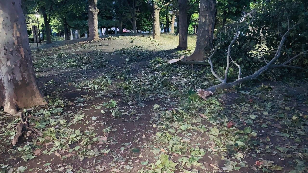 台風15号で倒れた樹木